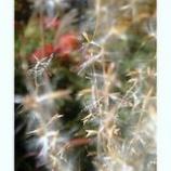 『すすきの穂からのぞく』の画像