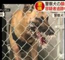 ヤマアラシに噛み付いた犬、顔に針200本