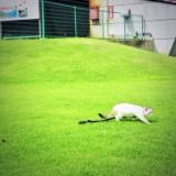子猫レオンの旅行記5!花の谷公園で走るニャの写真