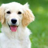 『ペットショップ店員「今週中に売れなかったら処分するからな」犬「やべえええええ!!!」』の画像