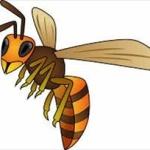 スズメバチって強すぎひん?