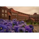 『大学無償化【2020年4月~】』の画像