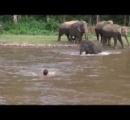 【動画】川に落ちたゾウ保護団体創設者を子象が救助 ← 子象の勘違いでした
