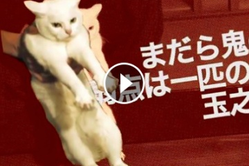 海外「ネコ + サムライ = 最強」猫と侍が活躍する時代劇に夢中になる海外の人々