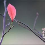 『明春を待つ』の画像