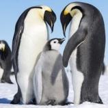 『今ドキの理想は『ペンギン夫婦⁈』🐧』の画像