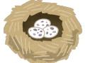 【悲報】謎鳥さん、とんでもない場所に巣を作ってしまうwwwww(画像あり)