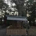 《御神業 報告》日枝神社 Mさん、磯神社 Oさん、横浜 IMAさん、砥鹿神社 Kさん