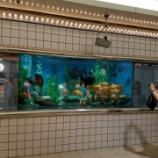 『かわいい水族館』の画像