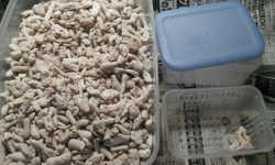 淡水魚水槽でもPH上げたいときはろ過材に珊瑚砂がおすすめ