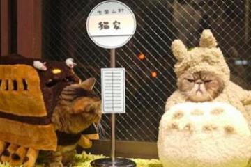 海外「日本の背中は遠いぜ」猫カフェの仰天企画に萌える外国人が続出