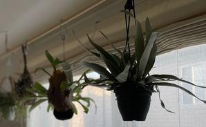 ホームセンターで買った観葉植物