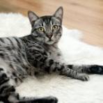 猫ちゃんのトイレ日記  獣医師からのアドバイス