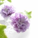 『グリーンと花のある暮らし! 庭の植物をお部屋に飾って爽やかに!!』の画像