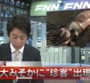 富山で体長およそ6メートルのダイオウイカを定置網にかかる( ´_ゝ`)フーン