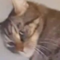 【ネコ】 私がゲームを始める。いっしょにやるにゃ♪ → 猫はこうなる…