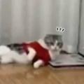 ネコの目の前に足をケガした飼い主がやってきた。片足でぴょんぴょん歩く → すると猫はこうした…