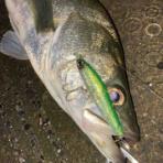 My Hobby Style 釣れない釣りは慣れてますpart2