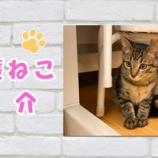 『【保護猫紹介】ことくん♂(子猫)たくさんなでてもらったよ♪』の画像