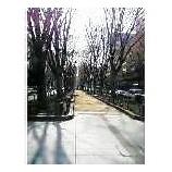 『仙台「定禅寺通り」』の画像