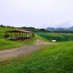 山の里自然農園のおいしゃん日記 ~ブルーベリーとオリーブ~