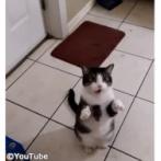 「お散歩させてくださ~い!」猫のかわいいおねだり(動画)