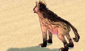 外観だけで見分けるのは至難の業…鬣ハイエナ