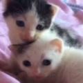 2匹の子ネコがくっついていた。小さくて可愛いなぁ → 猫の成長は早いですね…