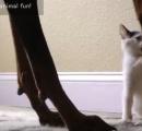 仔猫とドーベルマンはこんな風に遊びます