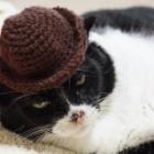 『老猫ソラの便秘再発で獣医さんに相談して治す』の画像