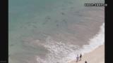 海水浴場にサメ30匹現れ騒動に(※画像あり)