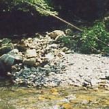 2013年度渓流解禁の前に その1の写真