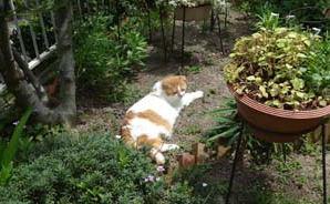 猫とガーデニング