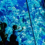 『【香港最新情報】「海洋公園(オーシャンパーク)が、再開に」』の画像