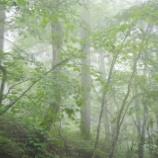 『雨の日の森林浴』の画像