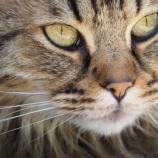 『猫の乳腺腫瘍と乳腺がん』の画像