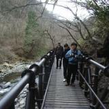 2007年 4月23日 清里で山菜採りのサムネイル
