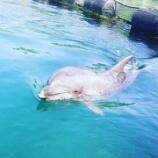 『【今治観光】伯方島のDolphin Farm でイルカを見てきたよ!ついでに伯方の塩ラーメンも』の画像
