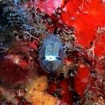 久米島ダイビングブログ
