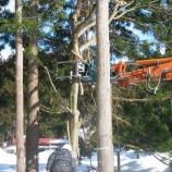 『杉の伐採』の画像