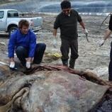 『英国のスーパーマーケットのプラスチックも一緒に飲み込んだスペインのクジラの死亡』の画像