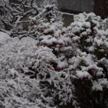 『雪景色2014①』の画像