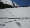 インド軍がツイッターに「雪男(イエティ)の足跡発見」と投稿、大騒ぎに