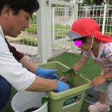 『さつまいもの苗植え』の画像