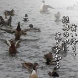 『水鳥』の画像