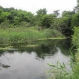2010年6月24日(木)  忍野のサムネイル