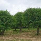 『サラリーマンの副業は長期収穫で考えるべき』の画像