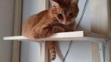 うちのデブ猫大台の6kgを突破(※画像あり)