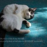 『ZEISS Touitの次はタムロンがミラーレス単焦点に参入か?35mmF1.4』の画像