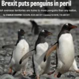 『英国のEU脱退問題によるペンギンたちの苦難』の画像